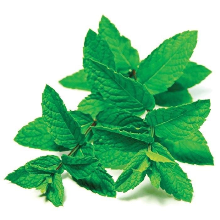 Fresh Mint (30ML)